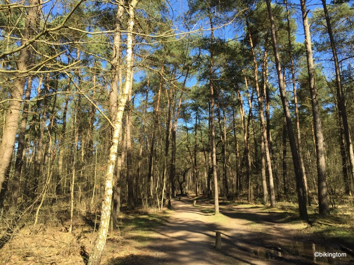 Im Wald von Lutterzand