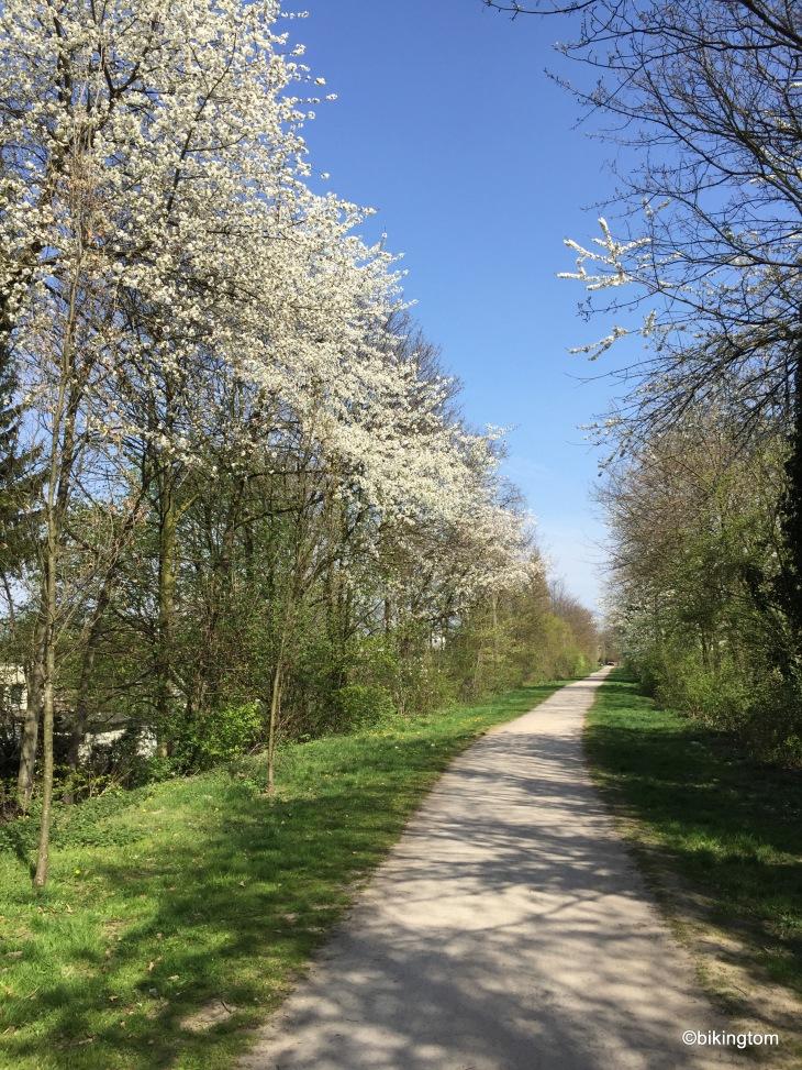 Blühende Bäume an der HOAG-Trasse.