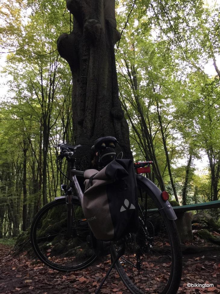 Verschlungener Baumstamm