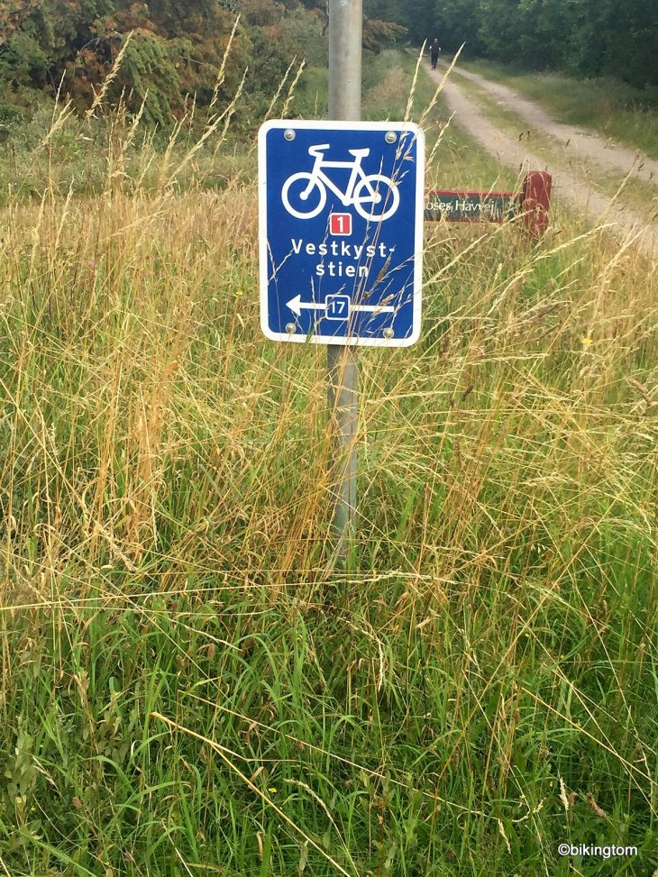bikingtom auf dem nordseeküstenradweg in der Husby Klitplanatge in Dänemark